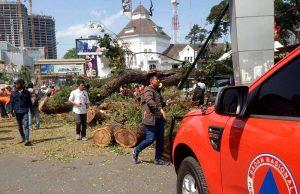 pohon-tumbang-2-medan-today