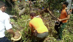 pohon-tumbang-3-medan-today