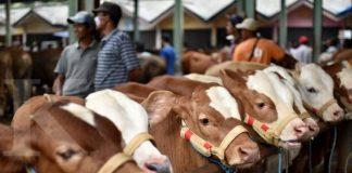 Pedagang dan pembeli bertransaksi sapi di Pasar Hewan Ambarawa, Kabupaten Semarang, Jawa Tengah, Kamis (9/11). Kementerian Pertanian (Kementan) berupaya meningkatkan populasi sapi nasional, salah satunya dengan melakukan Upaya Khusus Sapi Wajib Bunting (Upsus Siwab) melalui inseminasi buatan (IB) yang ditargetkan pada 2017 ini menyasar empat juta ekor sapi. ANTARA FOTO/Aditya Pradana Putra/aww/17.